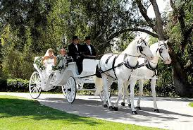 austin party bus limo bus bridal wedding services