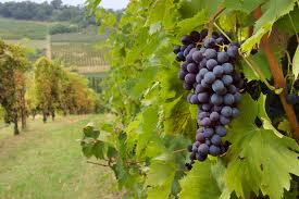 austin wineries fredricksburge discount transportion best